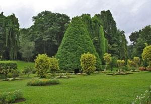 Entretien de jardin votre jardin a besoin d 39 entretien en for Entretien jardin automne