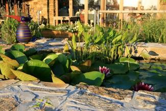 Aménager une mare au jardin: conseils et astuces